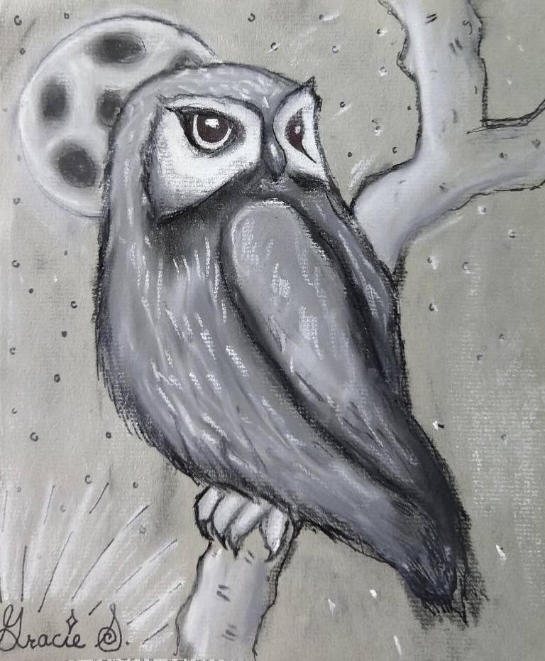 owl gracie.jpg