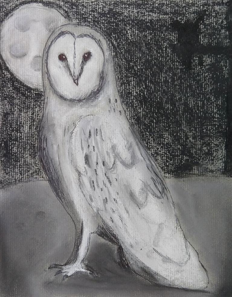 owl izzy.jpg