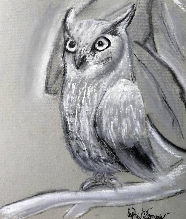 owl sophia.jpg