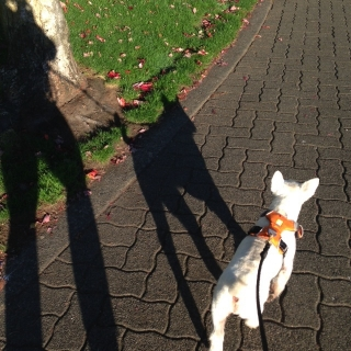 Morning walks with Willie feed my soul...