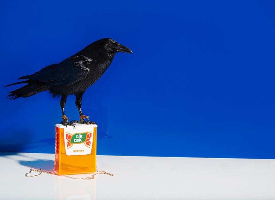 San Diego Zoo_Lucky Brands 06.jpeg