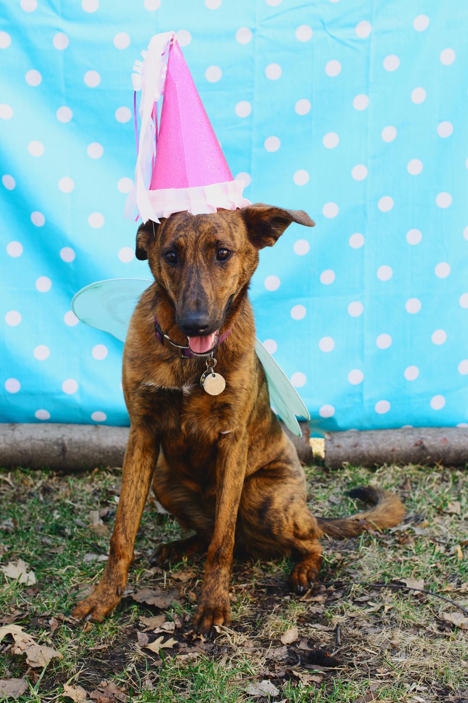 The birthday pup Sadie.