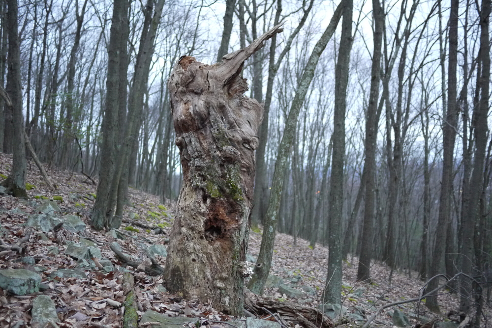 """Old stump watches over my home town, 2013, 20""""x13"""" digital print"""