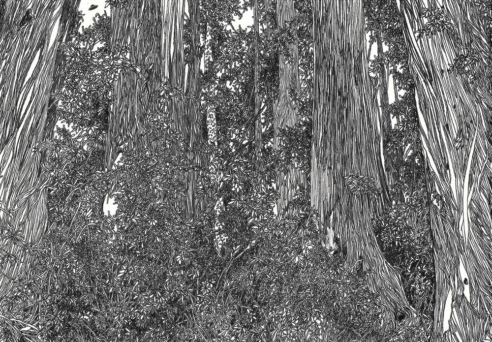 Zhou Fan 周范, Forest 1 森林 1, 2012, Archival ink pen on cotton paper 棉纸、钢笔, 17.2 x 24.5 cm