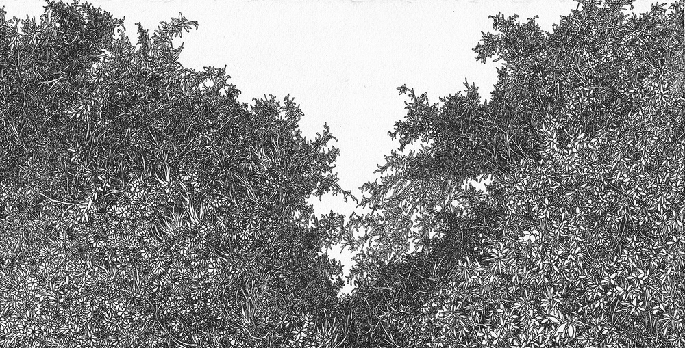 Zhou Fan 周范, Forest 4 森林 4, 2013, Archival ink pen on cotton paper 棉纸、钢笔, 18.5 x 25.8 cm
