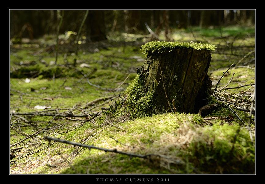 Wald_0001_TCL