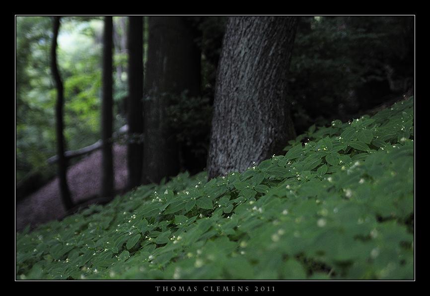 Wald_0002_TCL
