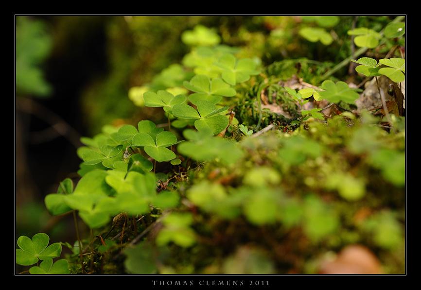 Wald_0003_TCL