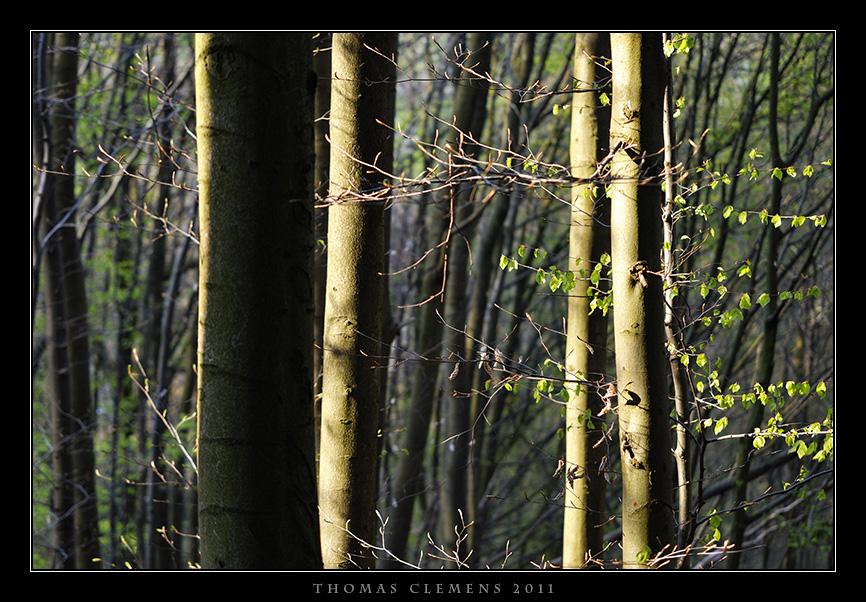 Wald_0004_TCL