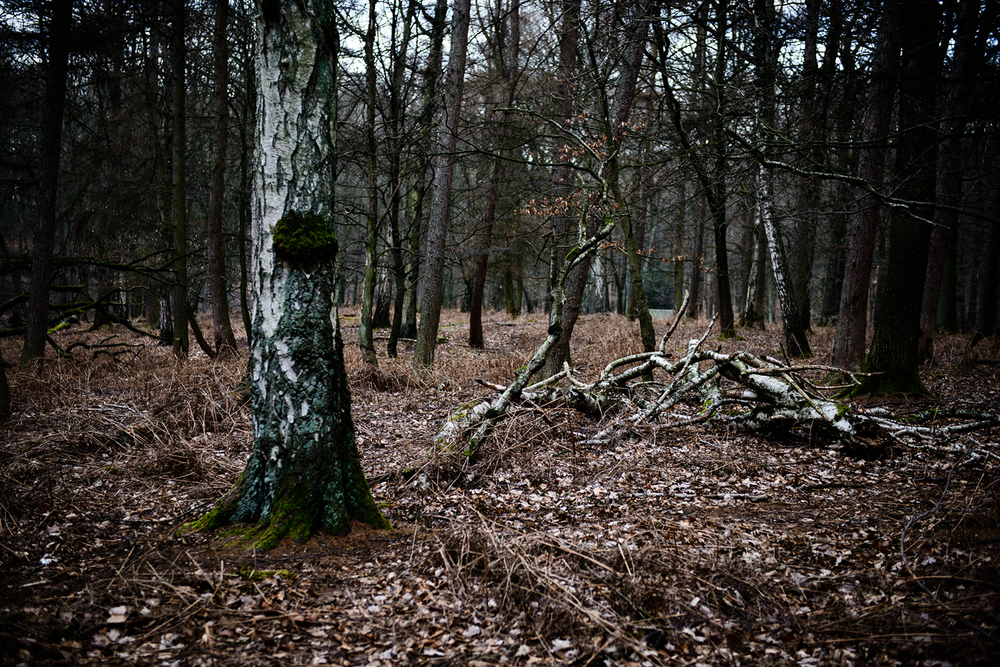Weitmarer Holz