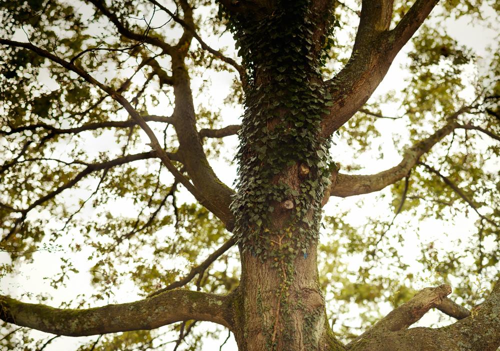 Ein Baum in Bochum Dahlhausen. Brenizer Methode