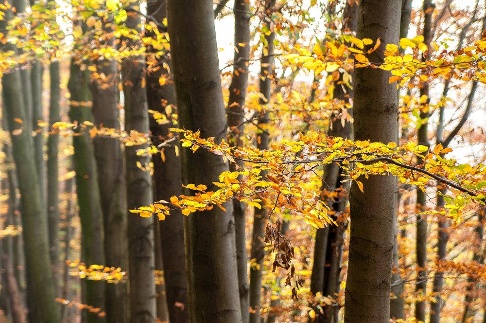 Muttental_20111106_046_2500px.jpg