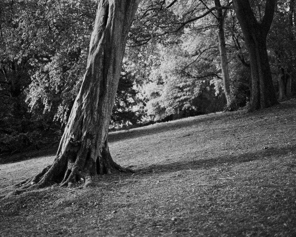 Stadtpark_12-Bearbeitet_2500px.jpg