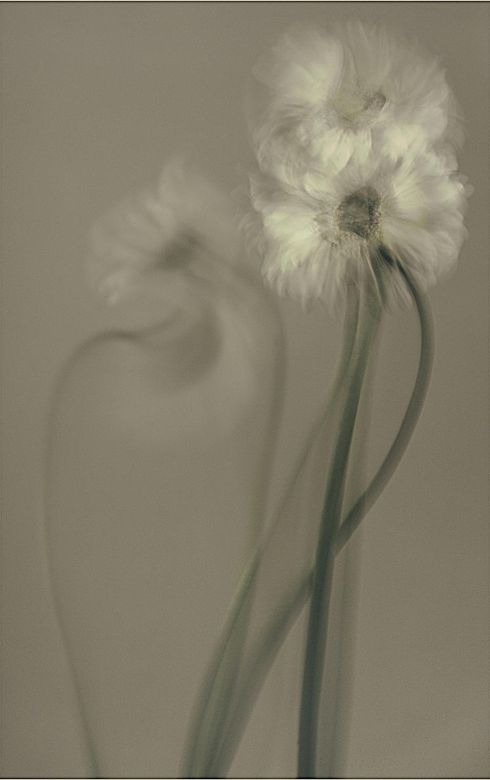 Derwish 11, Nasuhi,   2007 Cibachrome Photograph cm 196x122
