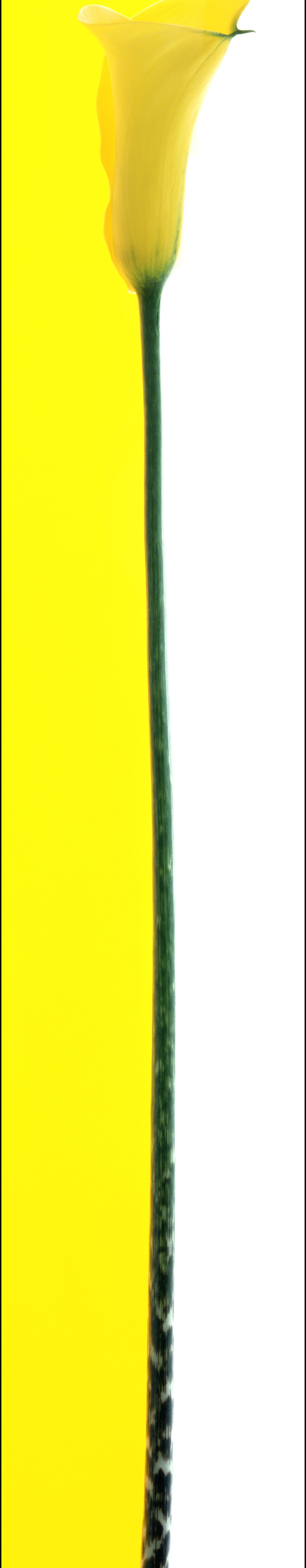 singles bar yellow.jpg