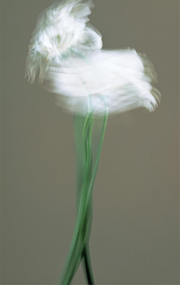 Dervish 10 Sunbuli , 2007 Cibachrome photograph cm 195,58 x 121,92