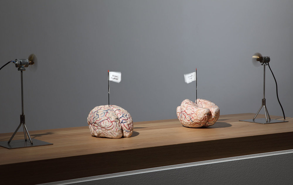 The brains of my mother and my father , 2006, silicon, textile, metal, oak, 23x15x21 cm (2 brains), base 110x110x50 cm, motors 29x15,3x14,9 cm Ph. Attilio Maranzano © Angelos bvba