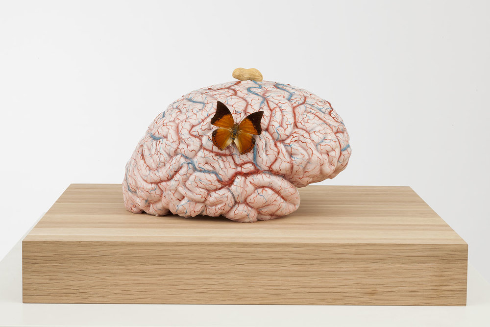 The sweet and satisfied brain of the lab-monkey , 2014, silicon, pigment, wax, wood, metal, insects, 50x45x28 cm Ph. Pat Verbruggen © Angelos bvba