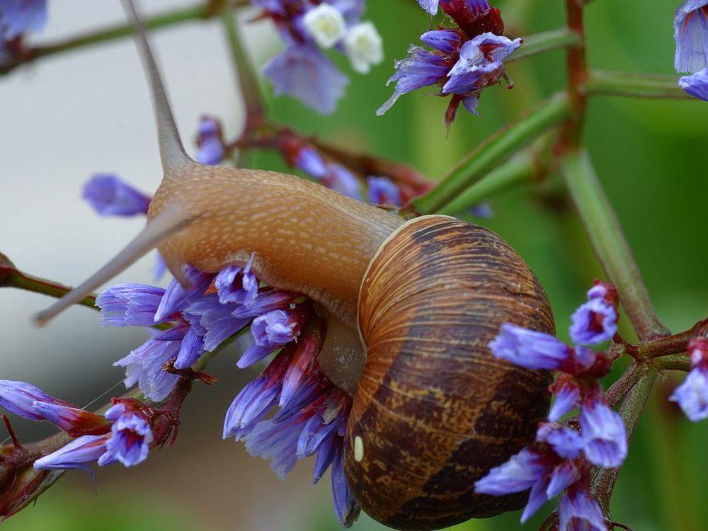 garden pest control.jpg