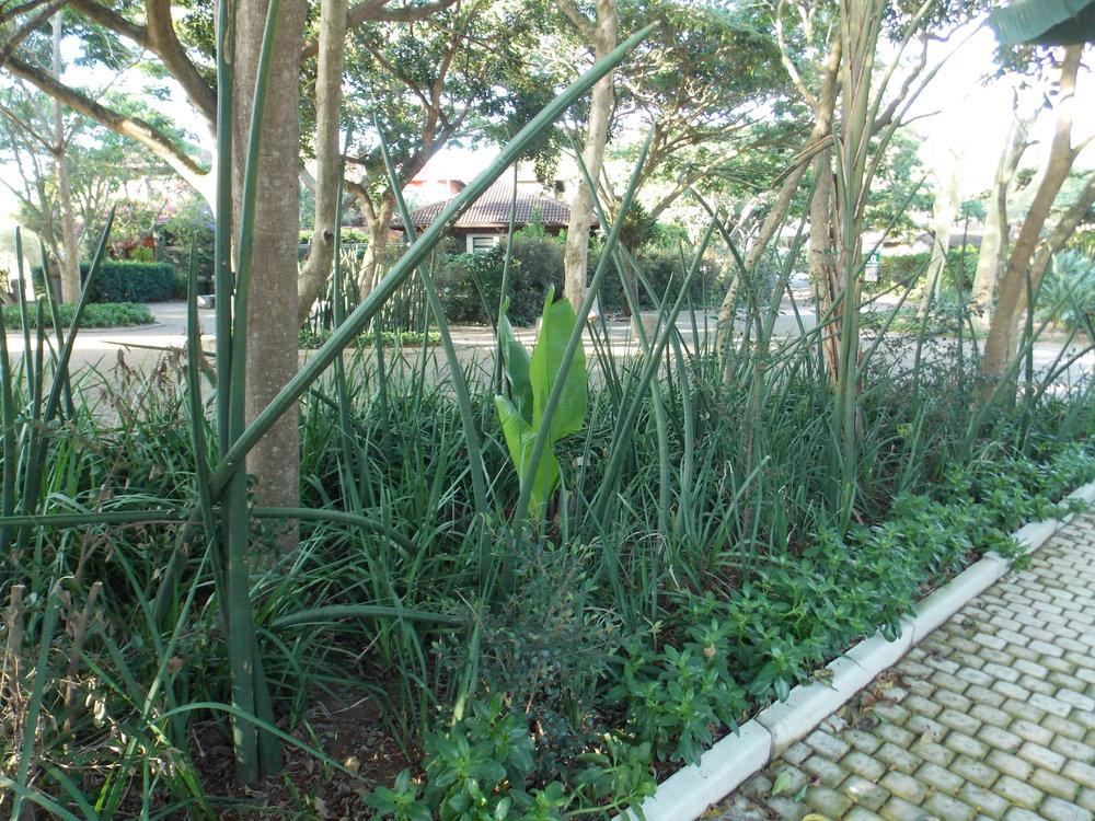 Ballito Gardens -