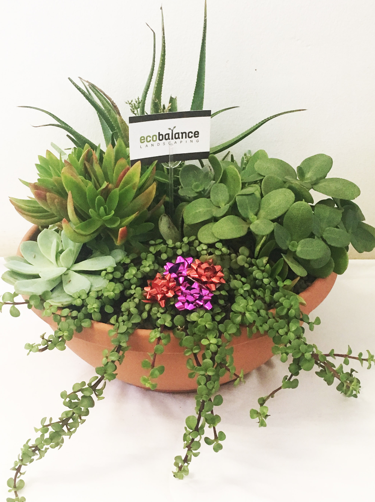 Large Gift Bowl - This gorgeous gift comes with a 35cm Succulent bowl, consisting of a lovely mix of succulent and water wise plants. A great idea as a gift for any plant lover.PRICE: R295 incl VATDELIVERY: Free on the Dolphin Coast