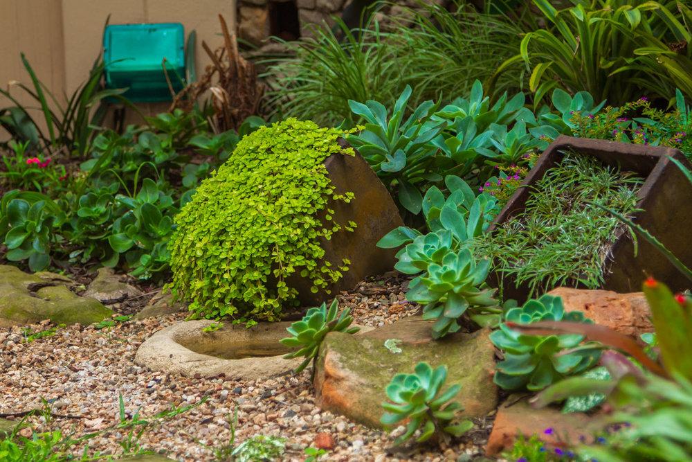 Creating a Succulent Rock Garden 10.jpg