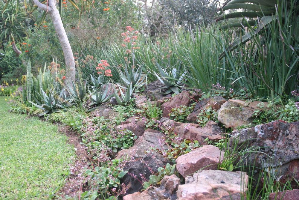 Succulent Rock Garden 1.jpeg