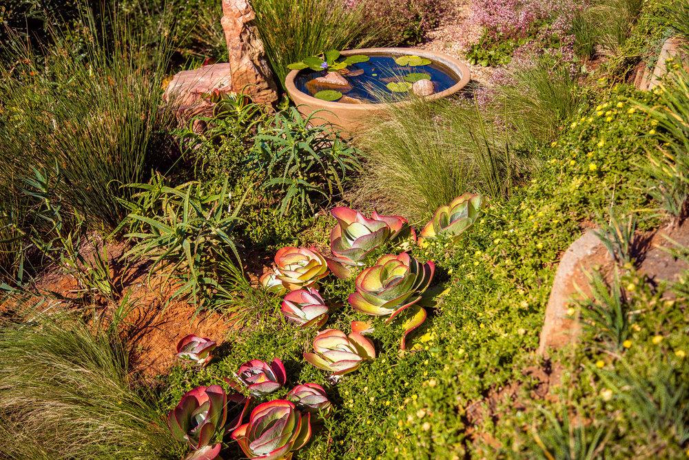 succulent rock garden 5.jpg