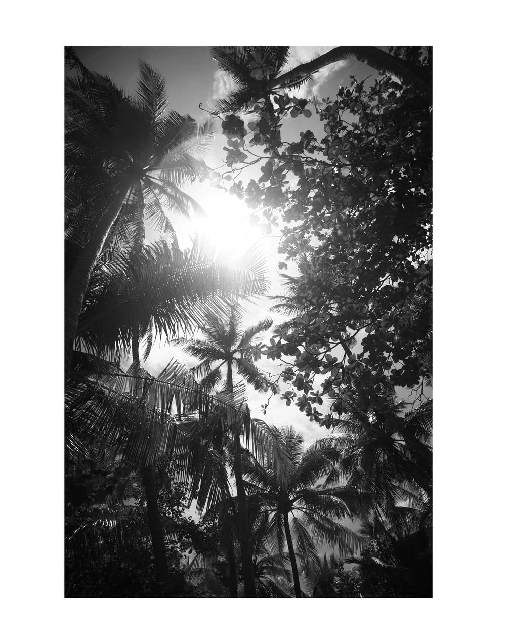 B&W Palms Portfolio.jpg