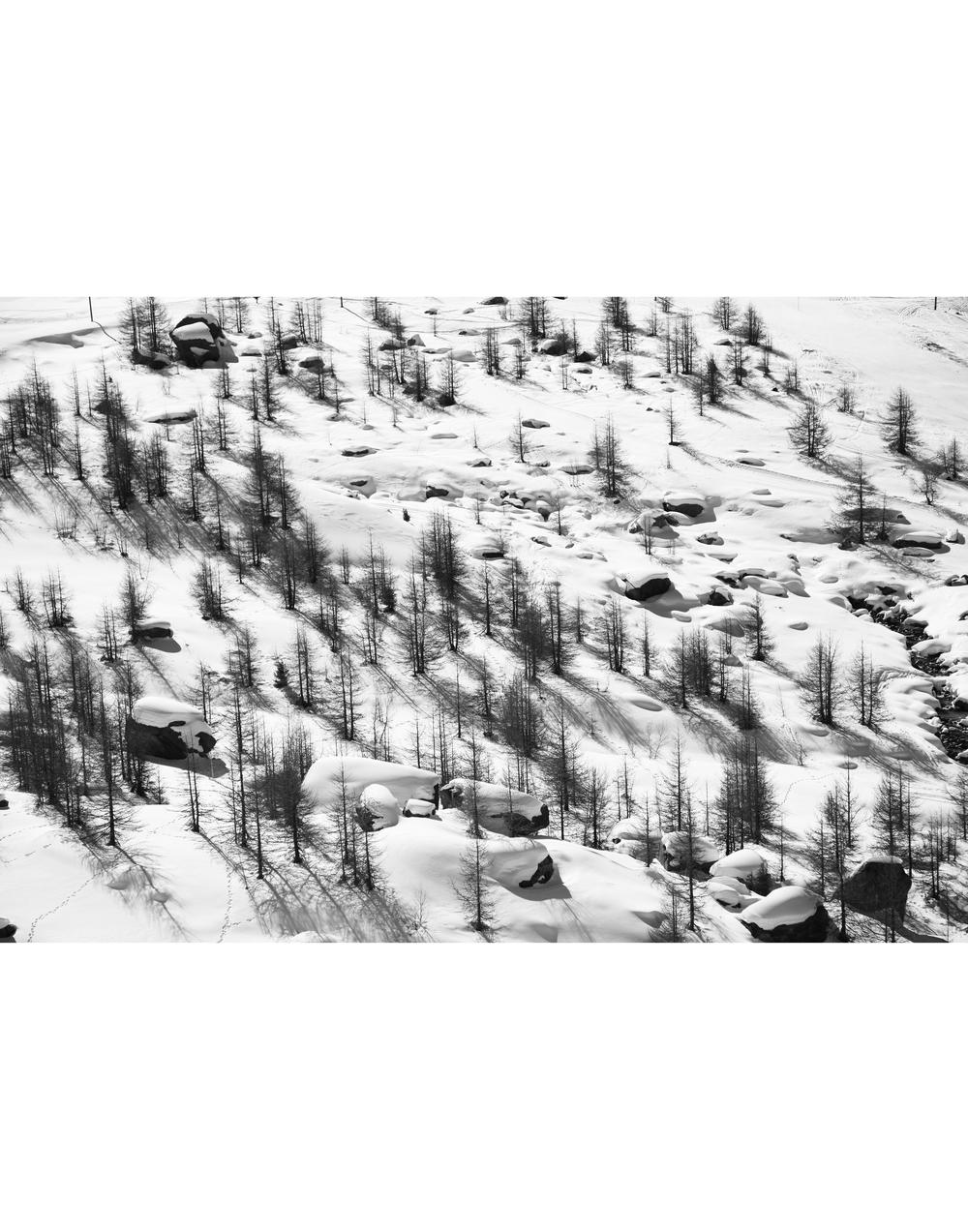 B&W Tree Landscape.jpg
