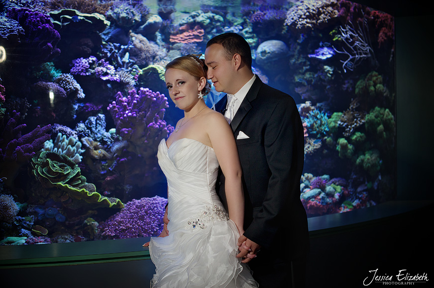 Aquarium of the Pacific Wedding Photography Long Beach CA