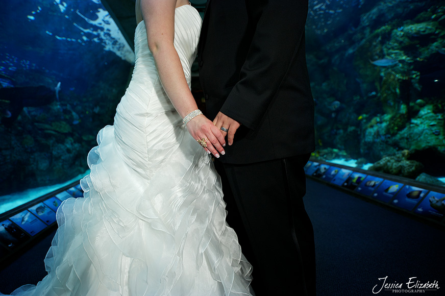 Aquarium of the Pacific Wedding Jessica Elizabeth Photography Long Beach-45.jpg
