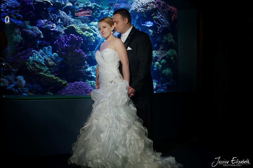 Aquarium of the Pacific Wedding Jessica Elizabeth Photography Long Beach-46.jpg
