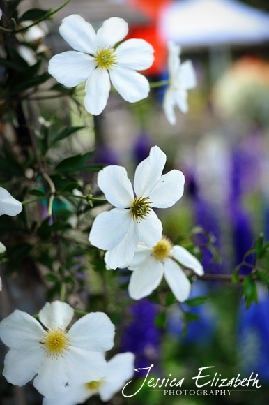 Jessica Elizabeth Photography Carlsbad Flower Fields-5.jpg