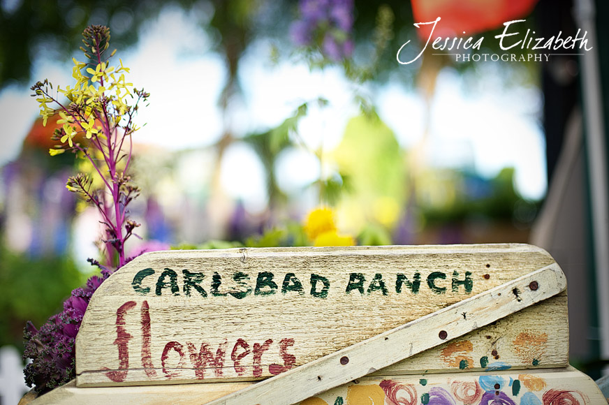 Jessica Elizabeth Photography Carlsbad Flower Fields-6.jpg