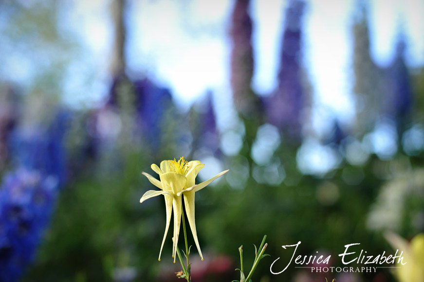 Jessica Elizabeth Photography Carlsbad Flower Fields-9.jpg