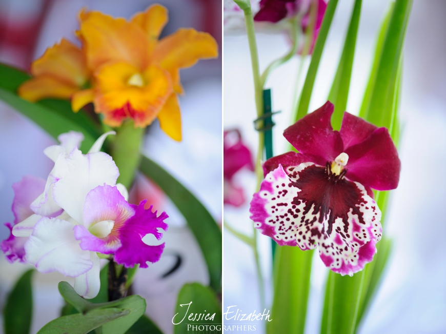 Orchid Centerpieces Wedding Photography Jessica Elizabeth-JET_2230_-w