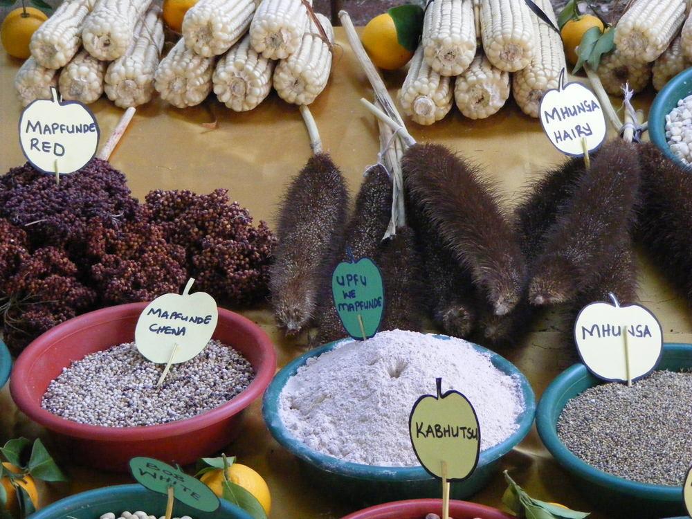 indig grains.JPG