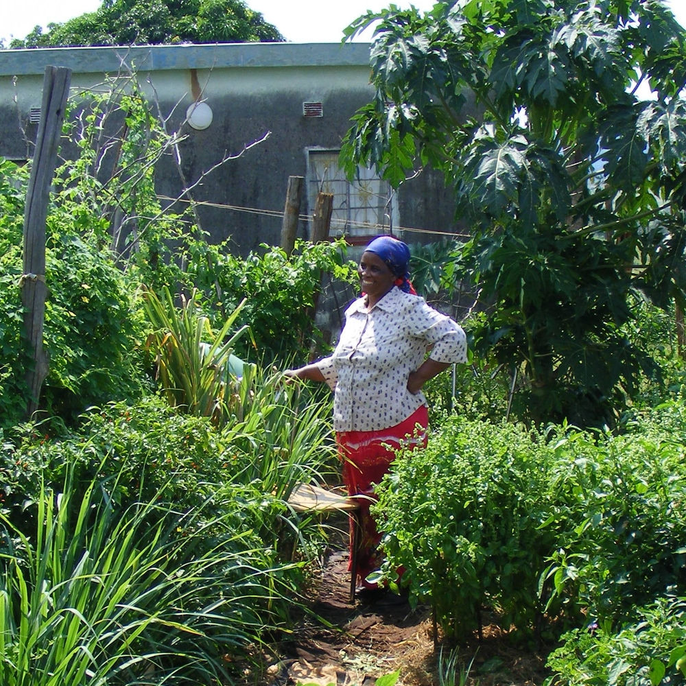 Zimbabwe garden project