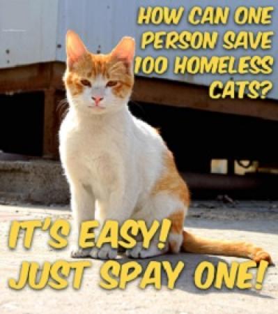 Save 100 cats.jpg