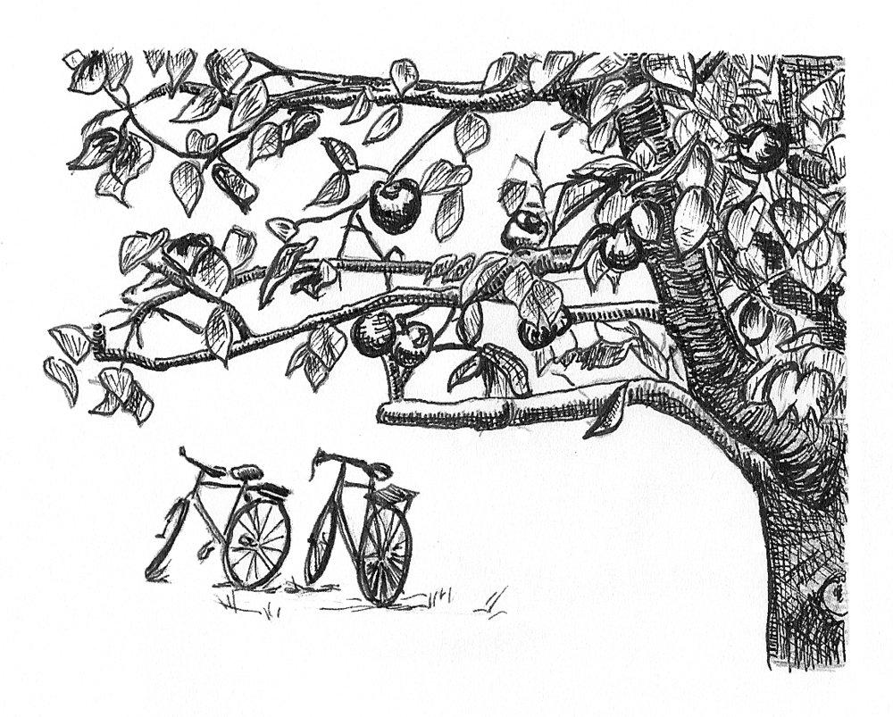 appletree-bikes.jpg