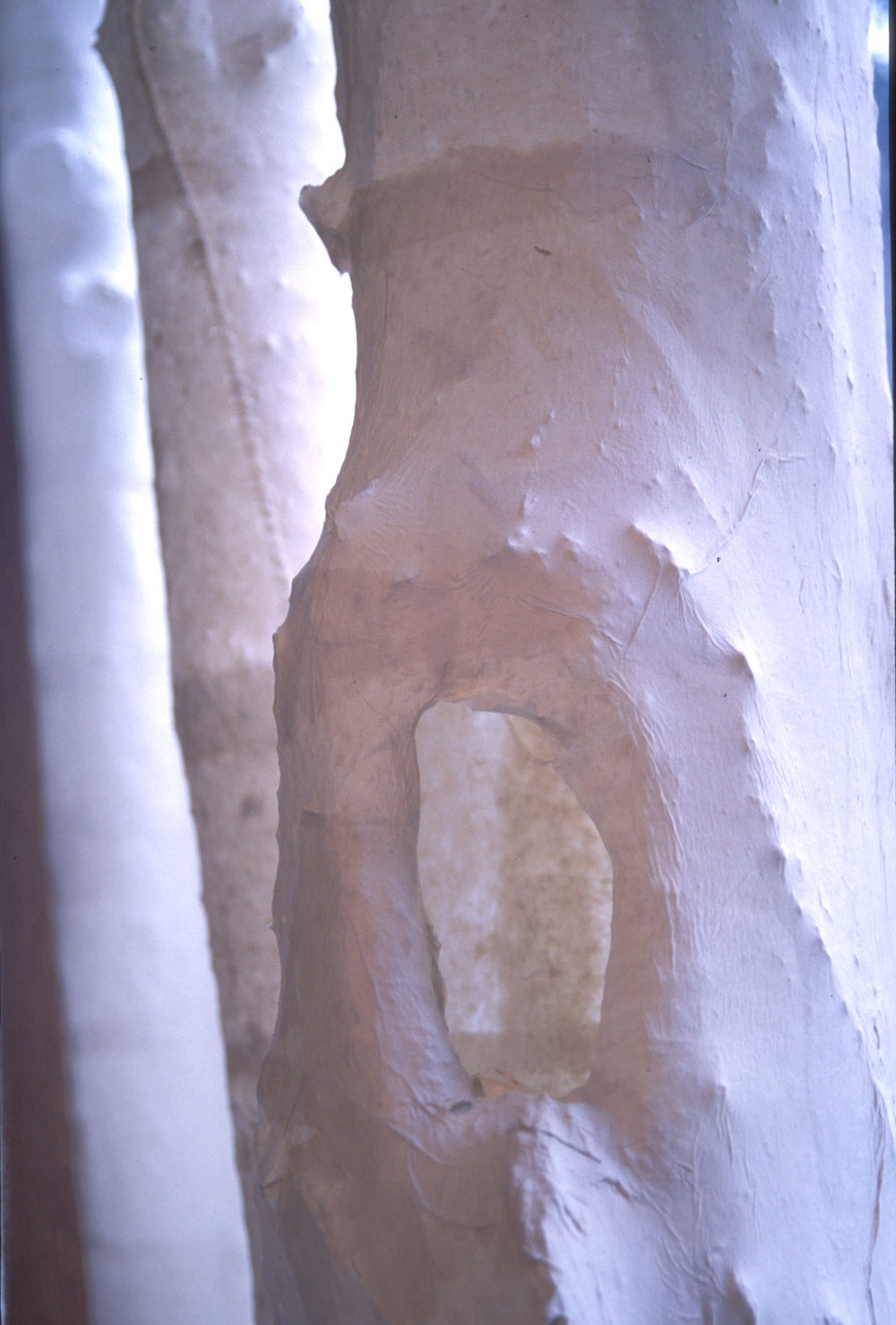 Remembering Trees (detail). 2004. Handmade paper, waxed linen. -