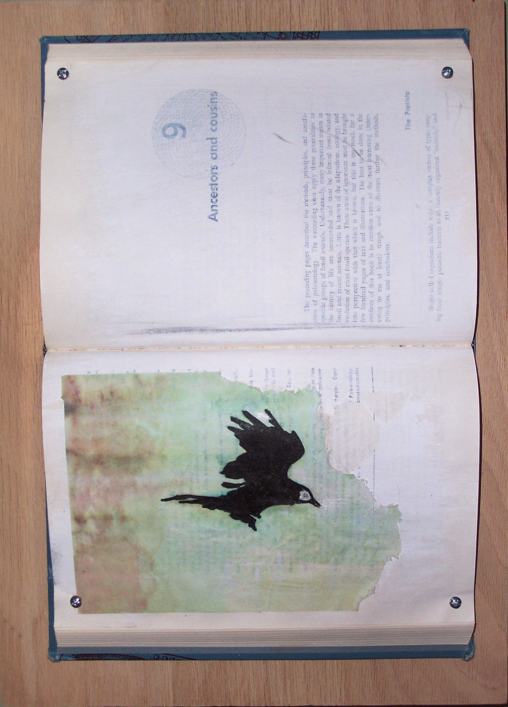 As the Crow Flies (pt. 2). 2008. Altered book, transfer print, ink illustration, gesso, screws, oak. -
