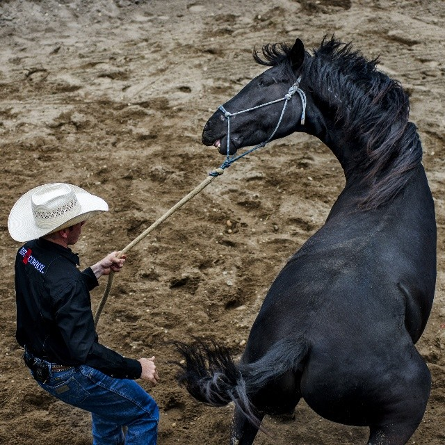 Cliff Schadt Jr. Begins the first day of training with a newly acquired feral mustang in preparation of the Extreme Mustang Makeover, where trainers train a wild mustang for 90 days. The trainers will showcase their horses and the horse's newly acquired skills at a competition.