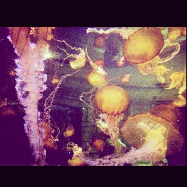 All the jellies #jellyfish #ocean #love #peace #thatshit #water #photography #journalism #travel #trip #notnews #westcoast #lasvegas #acquarium #nikon #iphone