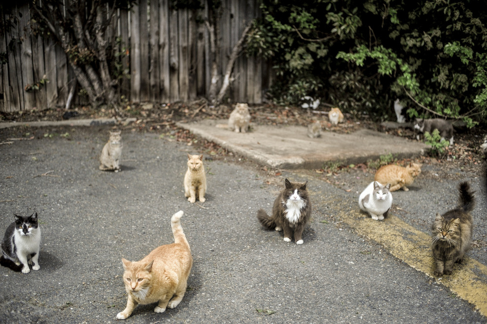 "An onslaught of (seemingly hostile) cats paw their way up to the car after leaving Arby's.  ""This is what it means to be stalked for your life"", I thought."