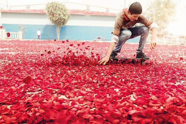 http://www.viralnova.com/explosion-of-flowers/