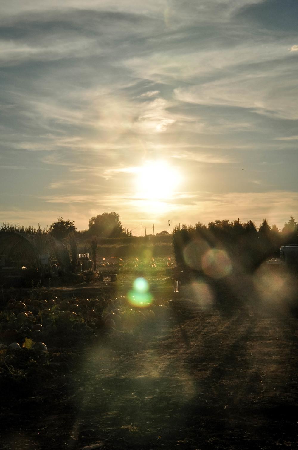 willis farm arizona