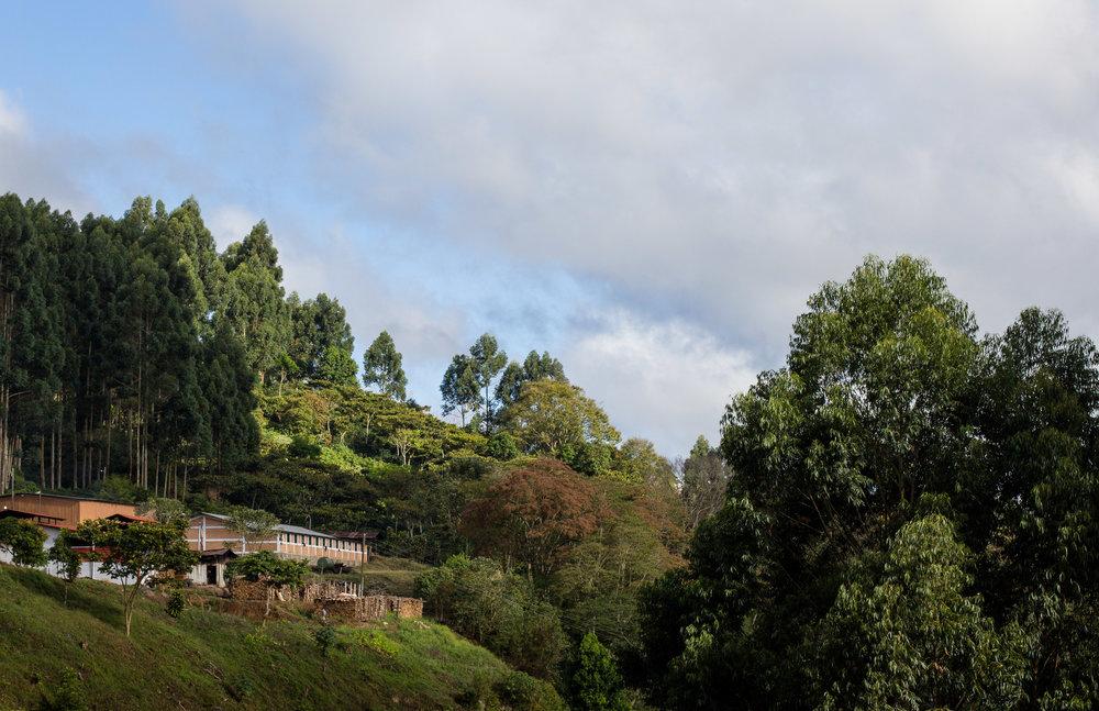 Project-Alianza-Trees-And-Schools.jpg