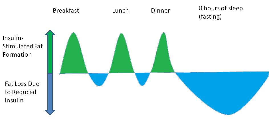 Skematisk oversigt over, hvad der sker med insulinniveauer og fedtforbrænding i løbet af en dag med tre måltider. Lånt fra M.Sc. James Krieger, via  Weightology .